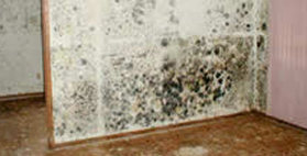 home mold remediation services