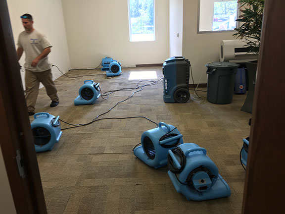 mold removal specialists