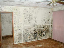 Mold Damage Lake Harmony PA